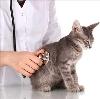 Ветеринарные клиники в Горных Ключах